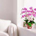 胡蝶蘭は豪華と好評
