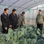 農作物の質